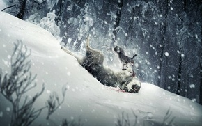 Picture snow, wolf, Hare