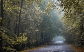 Picture road, autumn, Wisconsin, Tunnel of Gold