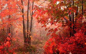 Wallpaper red, Autumn, forest, leaves