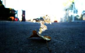 Wallpaper leaf, asphalt, stylish, abstraction