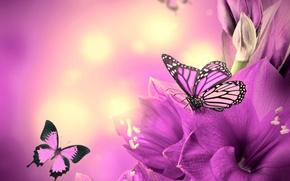 Picture butterfly, flowers, flowers, purple, butterflies
