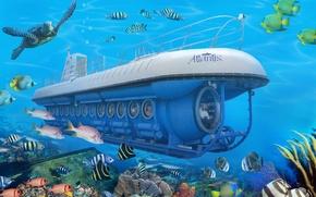 Picture submarine, under water, underwater, under water, tourists, reef, submarine, tour, tour, blue safary