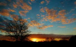 Picture clouds, the sky, trees, sunset
