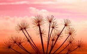 Wallpaper Plant, the sky, sunset