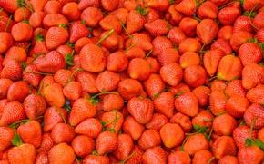 Wallpaper berries, harvest, strawberry