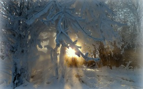 Picture winter, frost, rays, trees, branch, beauty