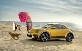 Picture beetle, Volkswagen, Volkswagen, Beetle