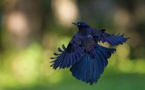 Picture flight, glare, background, bird