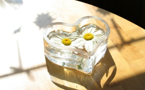 Picture CHAMOMILE, FLOOR, GLASS, FLOWERS, FLOORING, VASE, PAIR, WHITE, HEART, FORM, BACKGROUND