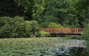 Picture greens, forest, bridge, green, Lake, forest, bridge, Lake