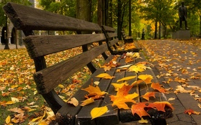 Picture trees, bench, fallen leaves, autumn Park