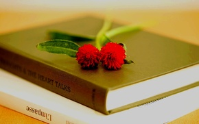 Picture flowers, macro, books, Wallpaper for desktop, background, HD wallpapers, book, leaves, petals, full screen, the ...