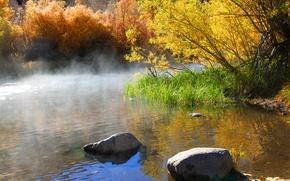 Picture autumn, trees, fog, lake, stones, morning, the bushes