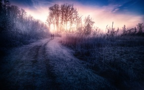 Picture road, the sky, grass, treatment, At dawn