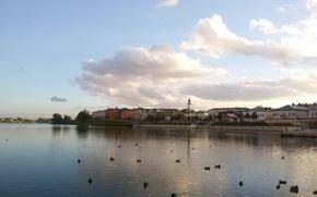 Picture Autumn, Kazan, Tatarstan, the Kaban lake, Duck