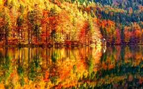 Picture autumn, forest, trees, lake, slope, house