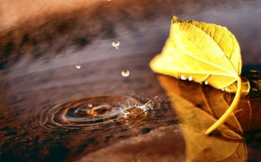 Picture autumn, drops, macro, sheet, puddle