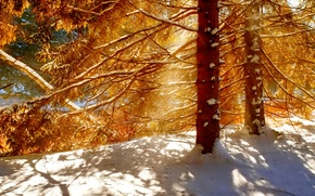 Picture winter, forest, light, snow, trees, shadow