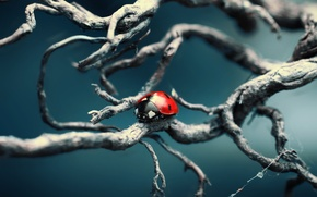 Picture macro, nature, branch, different, ladybug, of God