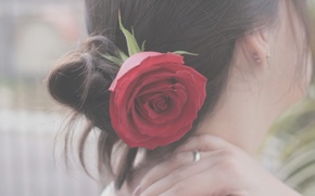 Picture flower, girl, mood, hair, rose, brunette, hairstyle, the back of the head