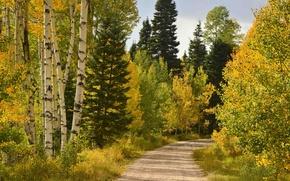Picture road, autumn, forest, Colorado, Junction creek