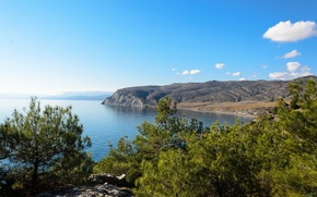 Picture landscape, coast, pine, Crimea, The black sea