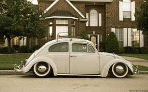 Picture beetle, beetle, Volkswagen Beetle, Beetle, Volkswagen beetle