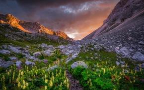 Wallpaper sunset, mountains, flowers
