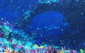 Picture graphics, sea, fish, corals, underwater world, Digital, An Octopus's Garden