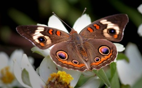 Picture flower, patterns, wings, Butterfly