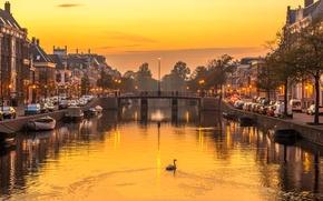 Wallpaper the evening, Haarlem, bridge, Netherlands, Swan, home, river