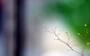 Picture macro, minimalism, branch, spring