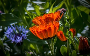 Picture grass, leaves, flowers, petals, garden, meadow