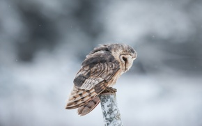 Picture snow, owl, branch, bokeh, looking for