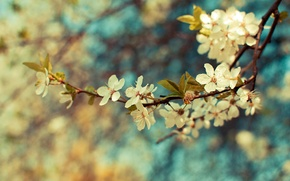 Picture leaves, color, flowers, Wallpaper, plant, branch, spring, branch