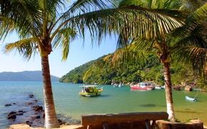 Wallpaper Bay, Palm trees, Boats