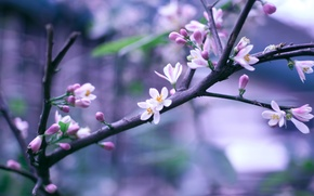 Picture flowers, sprig, branch, spring, pink, flowering, bokeh
