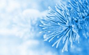 Picture winter, macro, snow, blue, Wallpaper, tree, spruce, wallpaper, widescreen, winter, background, snow, herringbone, full screen, …