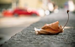 Picture the city, sheet, street, fallen, autumn