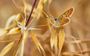 Picture autumn, leaves, nature, butterfly, plant, moth