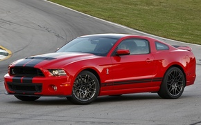 Picture Shelby, 500