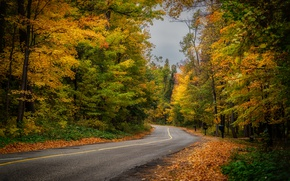 Wallpaper nature, forest, autumn, road
