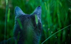 Wallpaper nature, grass, cat