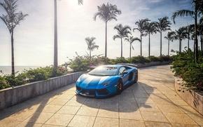 Picture the sun, palm trees, Blue, Lamborghini, Aventador, lp700-4