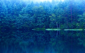 Picture forest, water, trees, lake, blue
