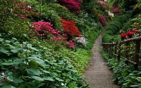 Picture plants, garden, track, Nature, flowers, garden, path