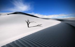 Wallpaper summer, tree, the sky, desert, sand