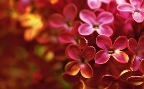Picture macro, flowers, spring, bright, lilac