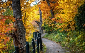 Picture road, autumn, forest, leaves, trees, landscape, nature, tree