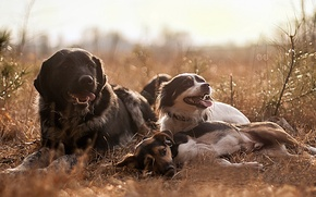 Picture dogs, stay, friends